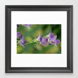 Orchid 8 Framed Art Print