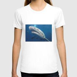 Lemon Sharks T-shirt