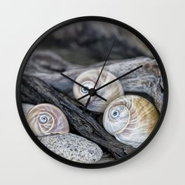 Shark's eye shells and driftwood Wall Clock