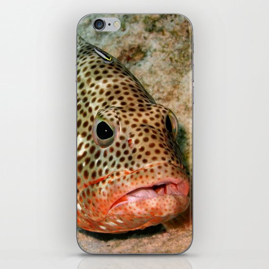 Coral Grouper Being Cleaned iPhone & iPod Skin