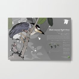 Black-crowned Night-Heron Infographic Metal Print