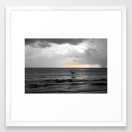 Pelican Brief Framed Art Print