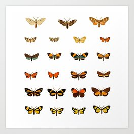 Butterfly Collection - Square Art Print