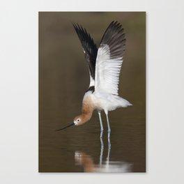 Avocet stretch Canvas Print
