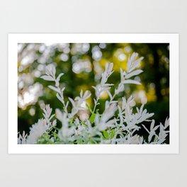 White Oleander Bokeh Art Print