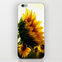 sunflower iPhone & iPod Skins featuring Sunflower by 2sweet4words Designs