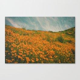 California Poppies 016 Canvas Print