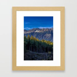 Arch of Larch Framed Art Print