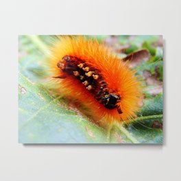Hairy Caterpillar the Underside Metal Print