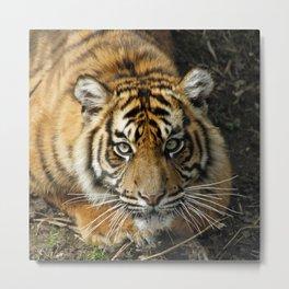 Tiger 2014-1001 Metal Print