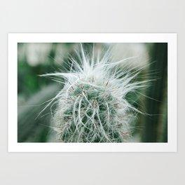 Cactus 06 Art Print