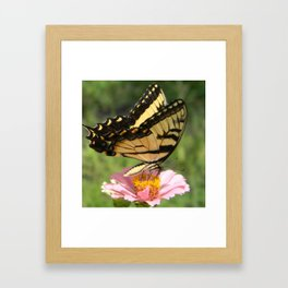 Look, a butterfly! Framed Art Print