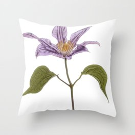 Clematis buttercup family Ranunculaceae garden hybrids jackmanii flowers Throw Pillow