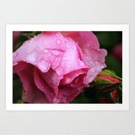 After the spring rain Art Print