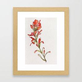 Indian Paintbrush II Framed Art Print
