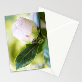 Strawberry Blonde Camellia from Bud to Bloom Stationery Cards