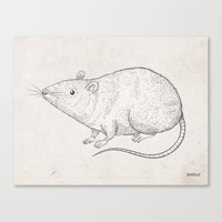 rat Canvas Prints featuring rat by raeioul