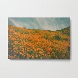 California Poppies 016 Metal Print