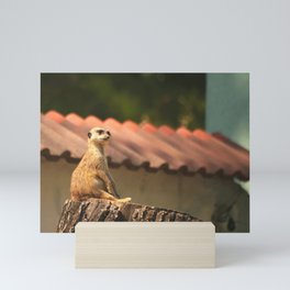 Meerkat Funny Observer #decor #society6 Mini Art Print