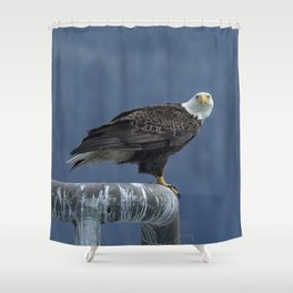 Bald Eagle of Resurrection Bay, No. 2 Shower Curtain