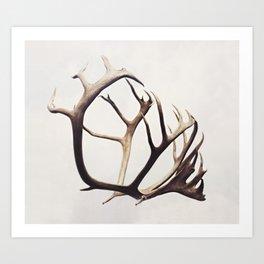 fig. 03   antlers Art Print