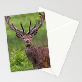 Proud Stag Stationery Cards