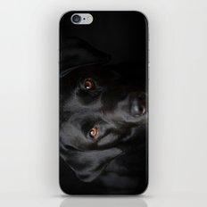 Black Labrador iPhone & iPod Skin