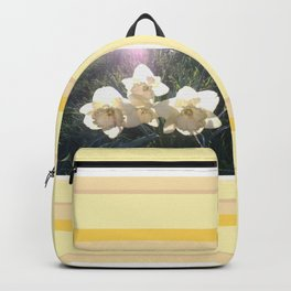 Early Morning Light Daffodils Backpack