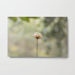Deadly dandelion Metal Print
