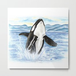 Breaching Orca Whale Watercolor Metal Print