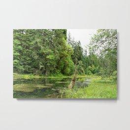 Hoh Rainforest Scene Metal Print