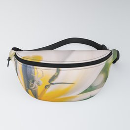 Closeup of a white spider in a white/yellow tulip. Fanny Pack