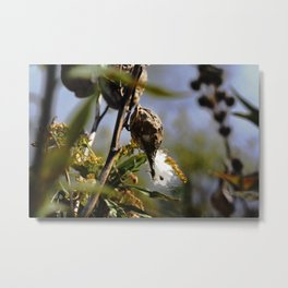 Early Spring Metal Print