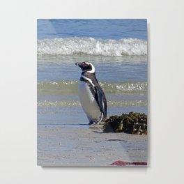 Magellanic Penguin by the Sea Metal Print