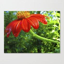 Flower Dew Canvas Print