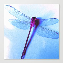 Iridescent Dragon Fly - Digital Photography Art Canvas Print