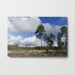 Forest View # 2 Metal Print