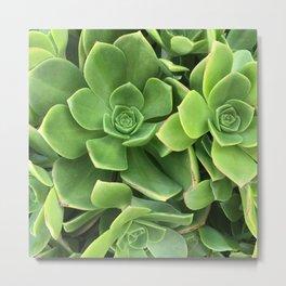 Succulents #1 Metal Print