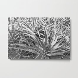 Dyckia in black and white Metal Print