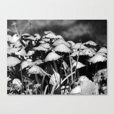 b&w mushrooms 2016 IV Canvas Print
