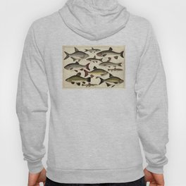 Vintage Illustration of Various Fishes (1902) Hoody
