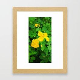 Celandine in the garden Framed Art Print