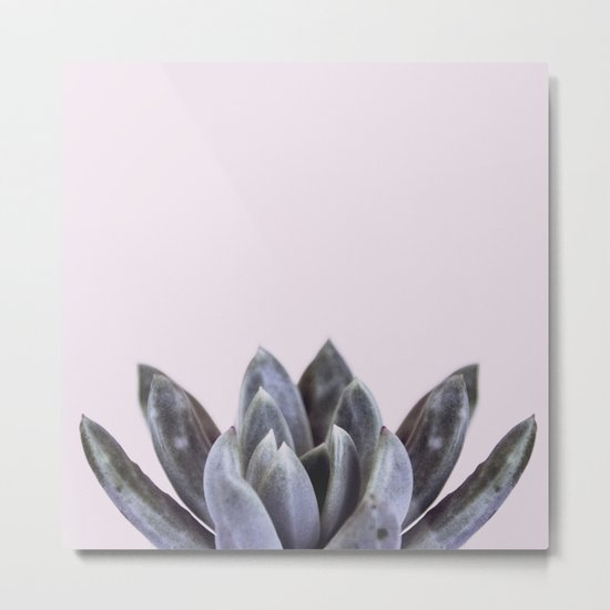 pink succulent cactus Metal Print