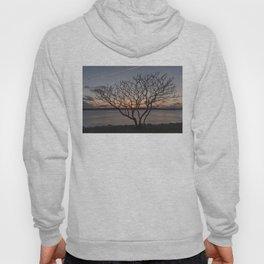 Sunset tree Niles Beach Hoody