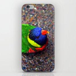 Eager Rainbow Lorikeet iPhone Skin