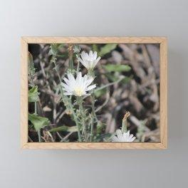 Desert Chicory Coachella Wildlife Preserve 2 Framed Mini Art Print