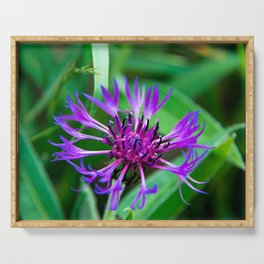 Cornflower in summer Serving Tray