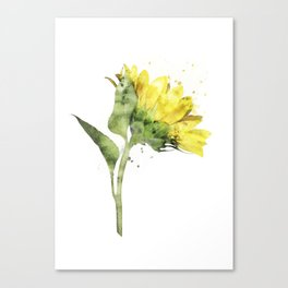 Watercolr sunflower Canvas Print