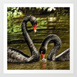 Black Swans Central Park Art Print