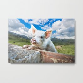Cute White Pig Looking Over Wall Metal Print